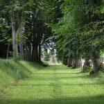 chemin bordé d'arbres